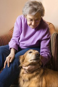 Elderly Caucasian woman in bedroom at retirement community center petting therapy dog.